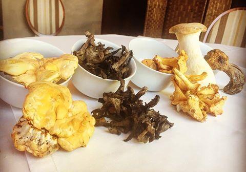 jornadas gastronomicas setas y hongos